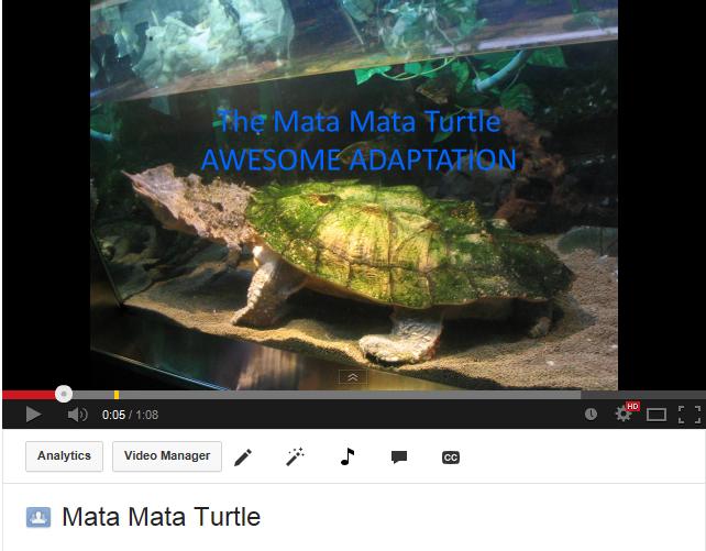 mata mata turtle amazing adaptations